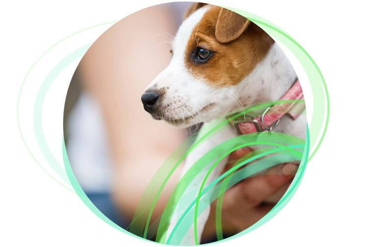 Small dog for RSPCA intranet case study.
